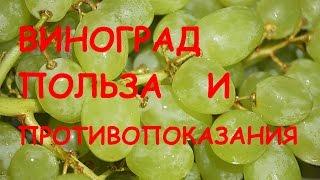 видео Польза винограда. О пользе виноградного сока. Вред или противопоказания для употребления винограда.
