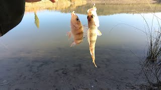 Мега рыбалка на окуня