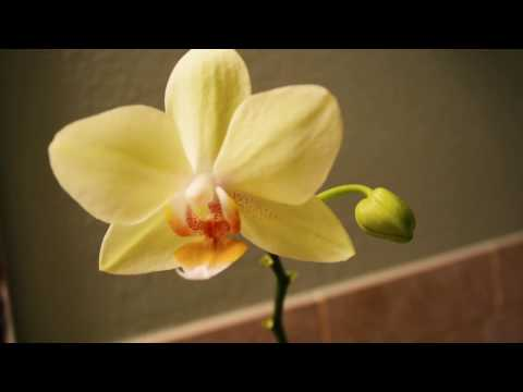 TURKEY SOUP DOES A COLD GOOD & ORCHID BLOSSOM (#61)