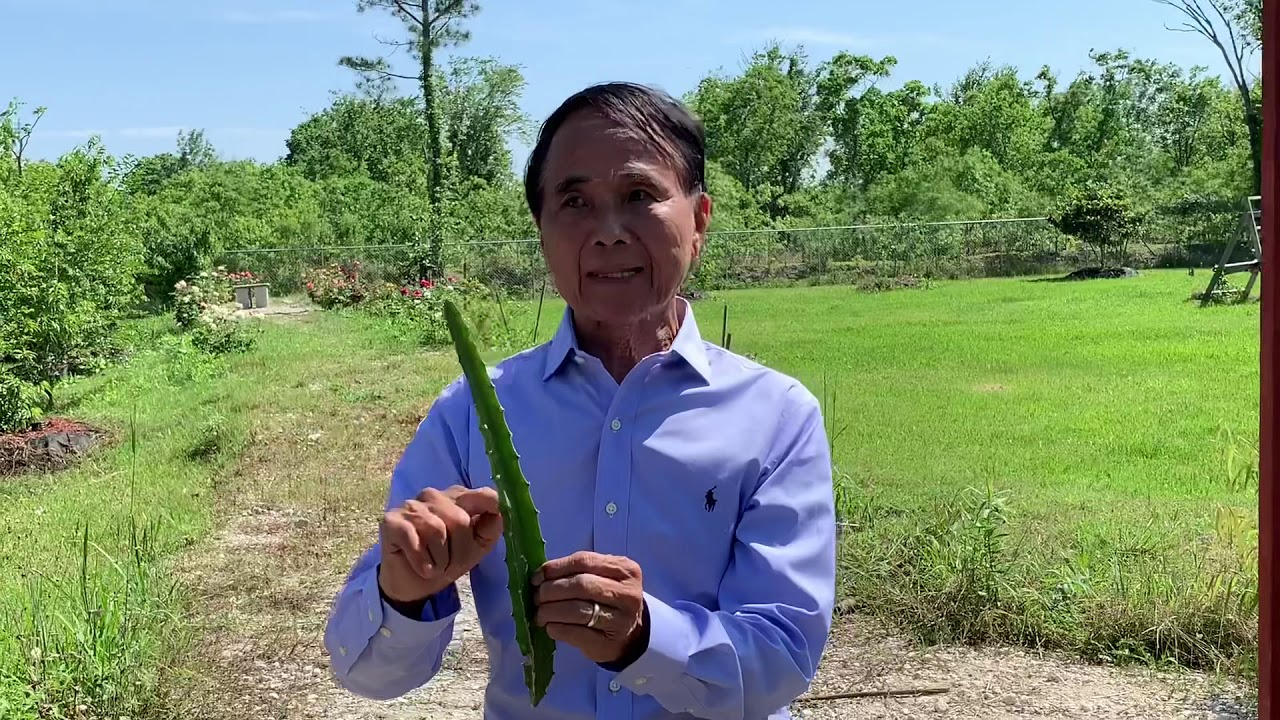 Growing Dragon Fruit - Mandarin with English Translator