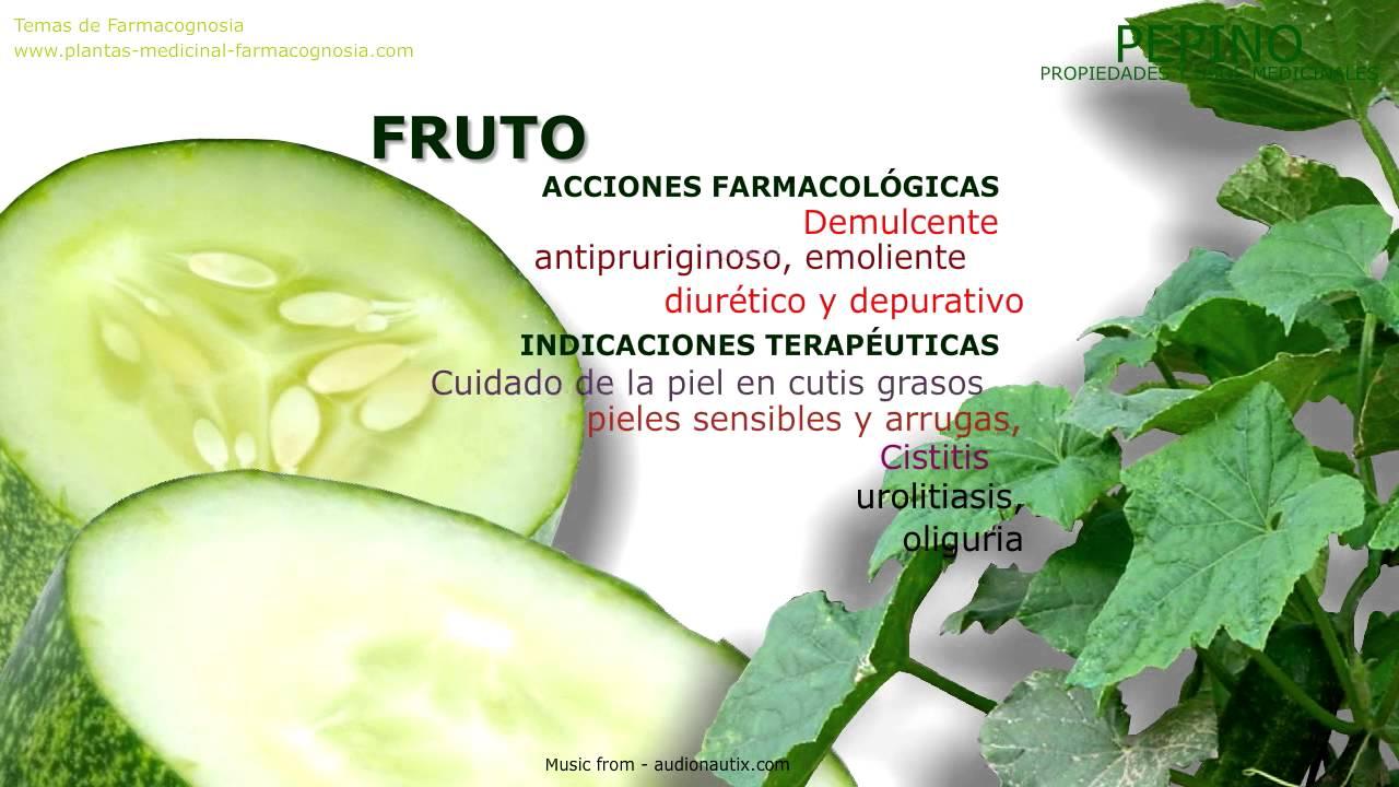 Pepino propiedades medicinales de la planta youtube for Planta decorativa con propiedades medicinales