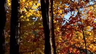 Video The Piano Guys Nearer My God To Thee (By Jacob Lawrence) download MP3, 3GP, MP4, WEBM, AVI, FLV September 2018