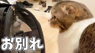 家族とお別れする猫…泣