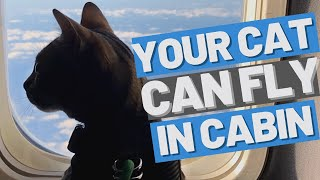 FLYING WITH MY CAT to Europe - How to plan for a trip with your cat