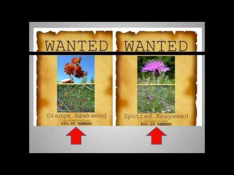 Invasive Plants You Should Know