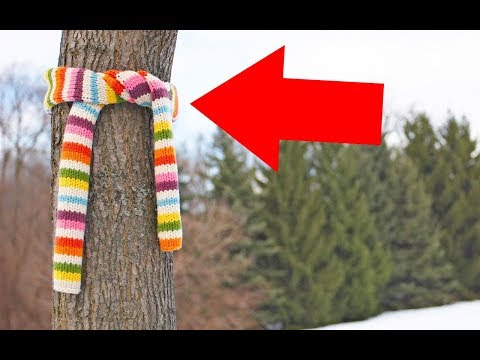 This Winter If You See Scarves Tied Around Trees Or Poles, This Is What It Means