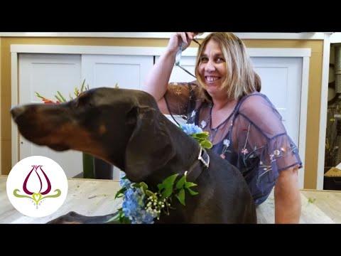 abbott-florist's-diy-dog-collar-for-your-wedding