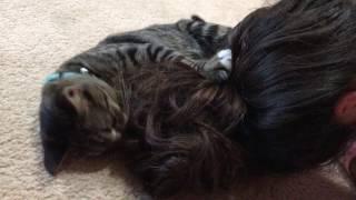 Video Hair! 😜 ~ Ringo 😺💛 download MP3, 3GP, MP4, WEBM, AVI, FLV Desember 2017