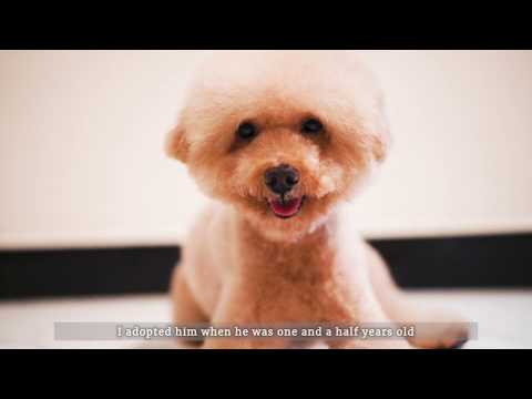 Wellness Top 10 Breeds: Miniature Poodle