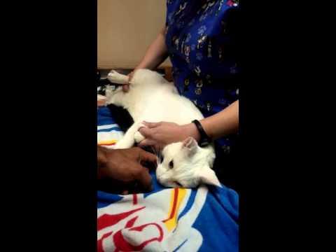 Как самому усыпить кошку в домашних условиях