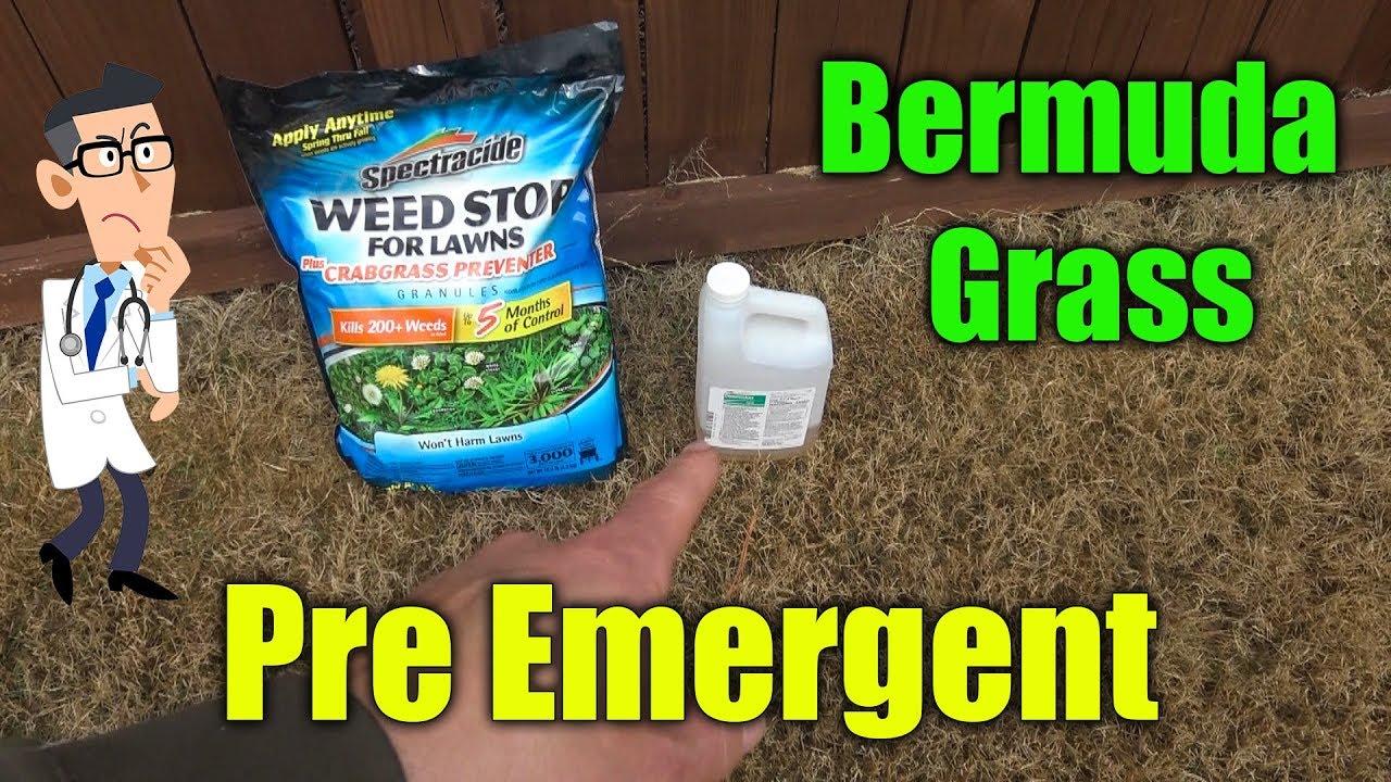 Pre Emergent For Bermuda Gr