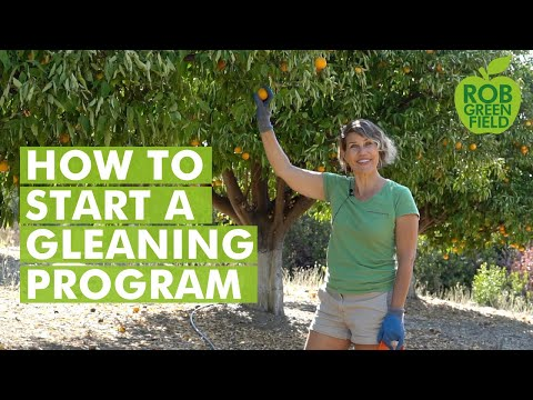 How to Feed the Community with Leftover Crops by Gleaning