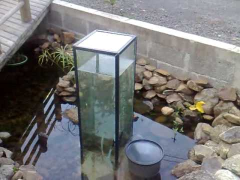 1st Ever Home Made Upside Down Aquarium Feeder Youtube