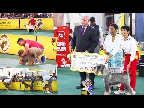 Another best dog show in Sri Lanka | CKC | Full Video | Pet Talk