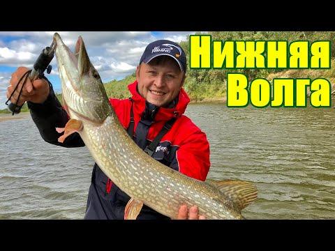 НИЖНЯЯ ВОЛГА. Рыбалка в Калмыкии. Ловля ЩУКИ и СУДАКА. (Часть 1 из 4)