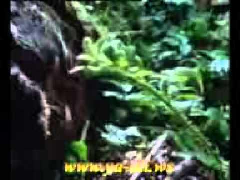 Haci Eldar Aslan Secilmish Hedisler 2  www...