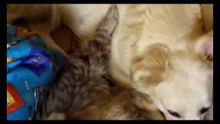 Полный диван кошек и собак.avi
