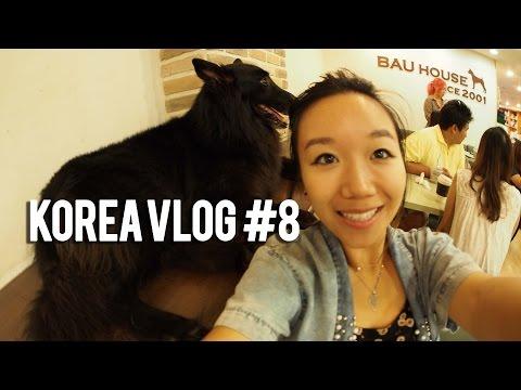 RINA IN KOREA VLOG #8 Soojaebi and Bau House (Dog Cafe in Hapjeong)