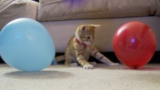 Kitten VS. Balloons!