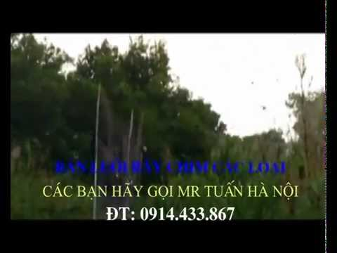 bán lưới bẫy chim 0914433867