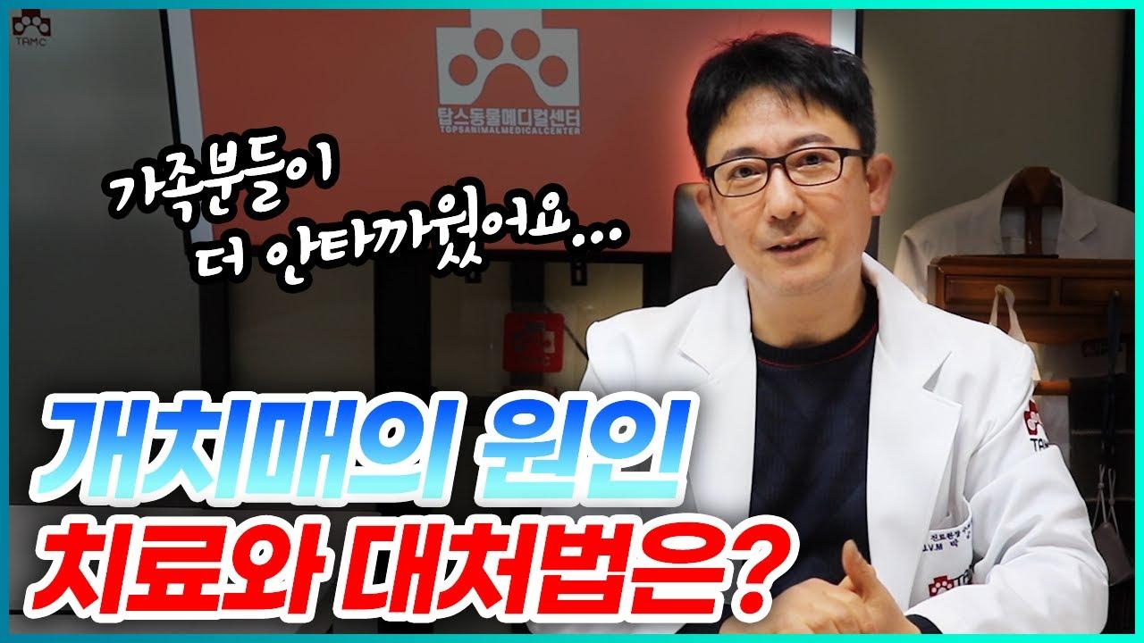 강아지도 치매에 걸리나요? 개 치매의 원인, 치료와 대처법 | 박순석의 동물병원 24시