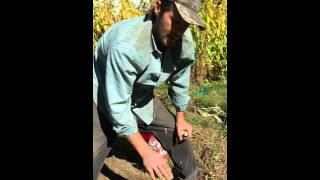 Planting Garlic in Westchester County, NY with Doug DeCandia