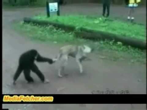 Maymun Köpek ile Dalga Geciyor