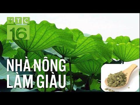 Tận dụng lá sen làm trà, tác dụng bất ngờ | VTC16