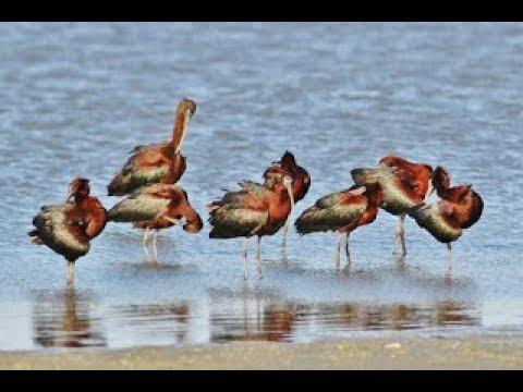 Dating με παρατηρητές πουλιών