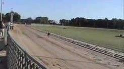 Greyhound Fun Run 2007