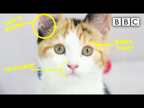 Learn to read your cat's feelings - BBC