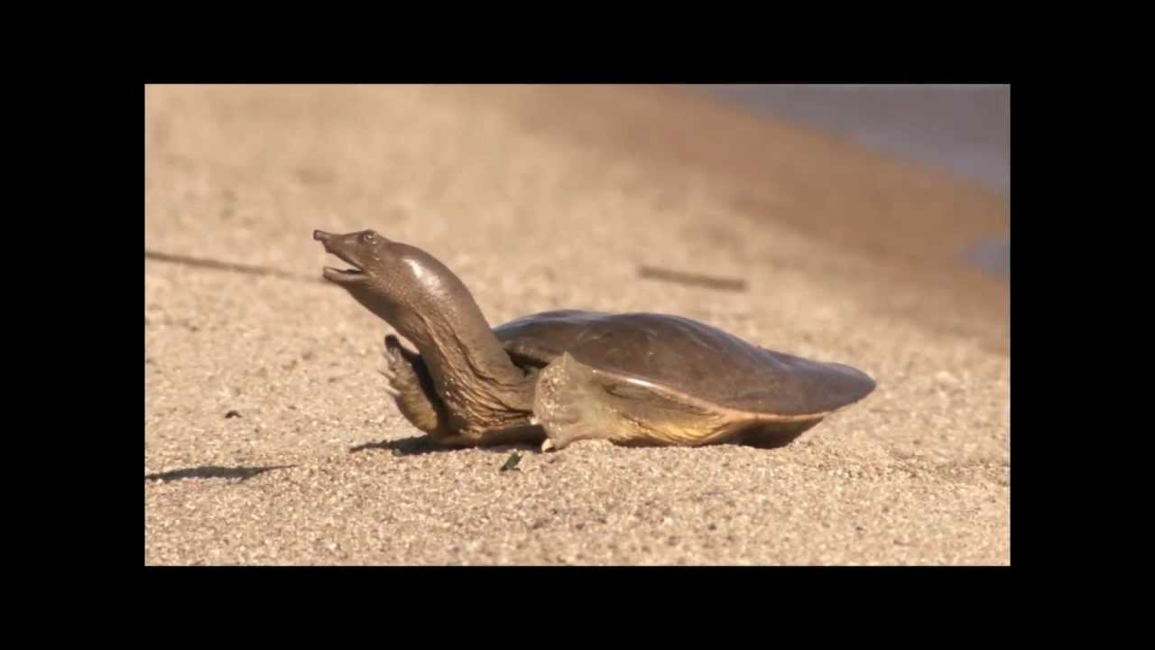 Оргазм черепахи прикол фото 171-472