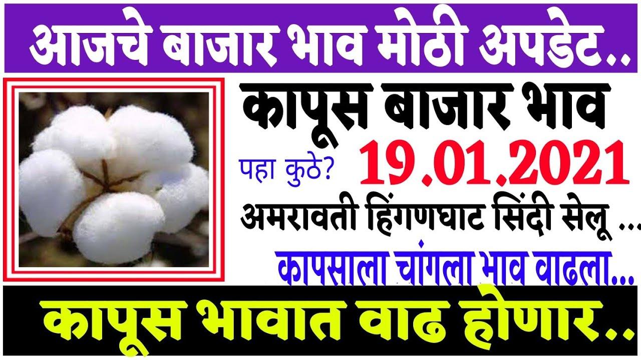 आजचे कापसाचे भाव वाढले 19 जानेवारी 2021 || कापुस बाजार भाव वाढले|| Cotton Market Rate || Kapus Bazar