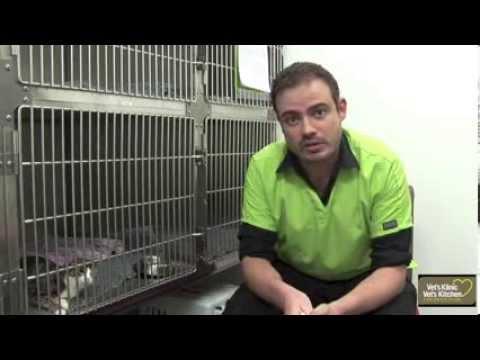 Pet Insurance Tips
