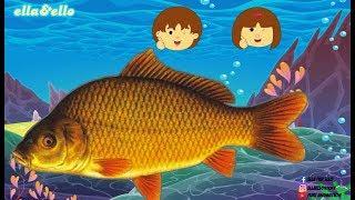 Download Lagu S2-E53 : Ayo Temukan - Ikan Air Tawar | Puri Animation mp3