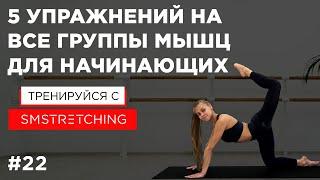 5 простых упражнений на все группы мышц для начинающих 🐣   SM Stretching
