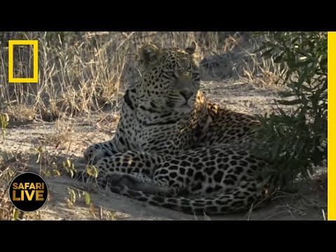 Safari Live - Day 376 | National Geographic