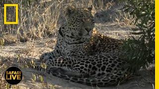 Safari Live - Day 376 National Geographic