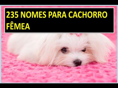 nomes para cachorros femeas