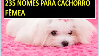 Video 235 NOMES DE CACHORRO FÊMEA -  NOME DE CACHORRO FÊMEA download MP3, 3GP, MP4, WEBM, AVI, FLV Agustus 2018