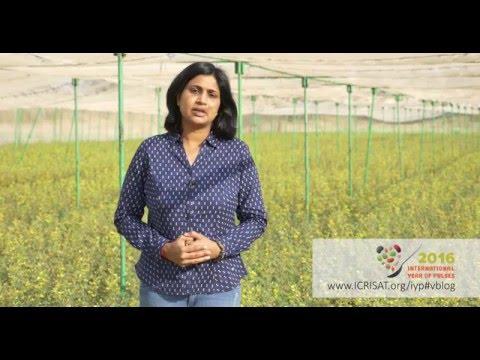 International Year of Pulses 2016 (Insights from Dr Anupama, Hingane, ICRISAT)