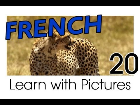 Learn French Safari Animals Vocabulary