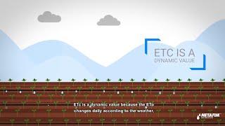 How much to irrigate |  Netafim