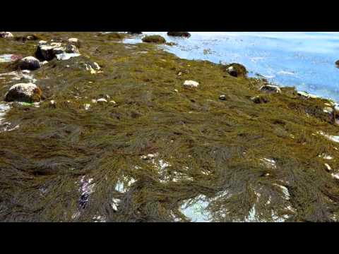 Rocky intertidal Biome Project
