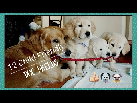 Top 12 Child-Friendly Dog Breeds