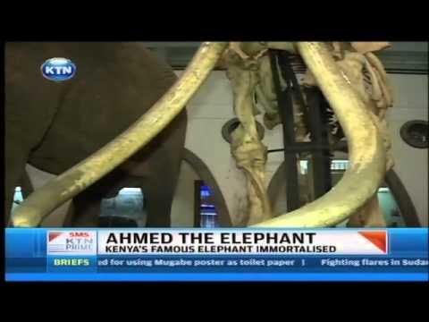 Meet Ahmed the elephant at Nairobi National park