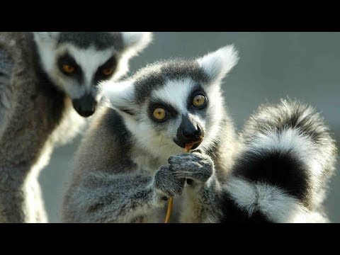 Madagascar aims to bring in more tourists from China