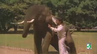 Nadakkattum Song | Ram Lakshman Movie | Kamal Haasan