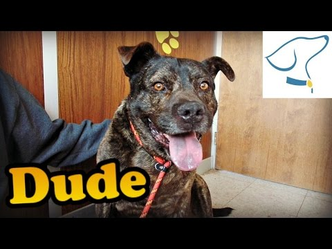 Adopted Dude: Lucas County Canine Care and Control