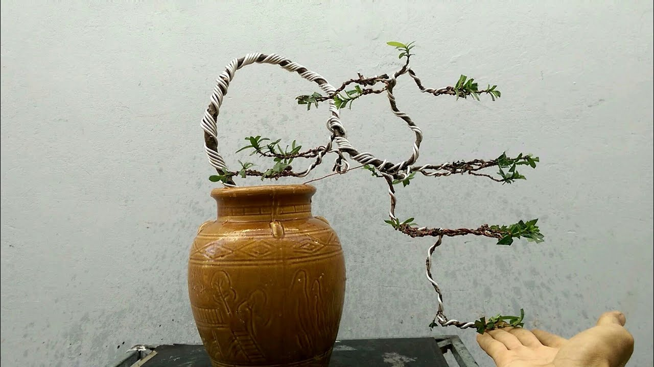 Uốn cây ,tạo dáng đỗ cho cây trang đỏ (hoa mẫu đơn )